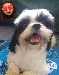 Tinder Dog. Shitzu