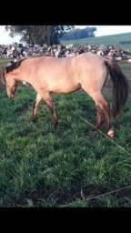 vendo cavalo top mansso