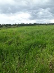 Fazenda formada a venda a 137 km de Macapá