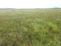 6.000 hectares no lago novo para soja