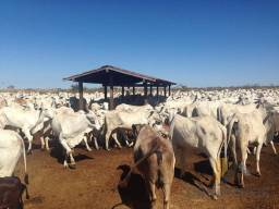 Rural fazenda - Bairro Zona Rural em Corrente
