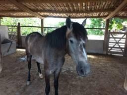 Cavalo manga larga picado