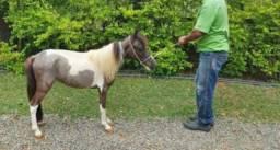 Mini Cavalo