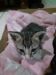 Filhote de gato adoção