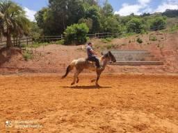 Cavalo Pampa ,quarto de milha