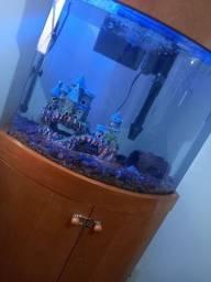 Aquario Baloado com Móvel