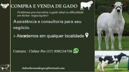 Dificuldade em comprar e vender gado?