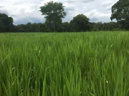 Fazenda ha 30 km de Cuiabá Excelente Propriedade