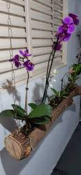 Orquídeas no tronco