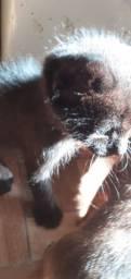Doa se gatinhos pretos