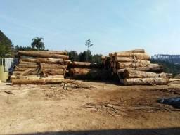 Tora de eucalipto
