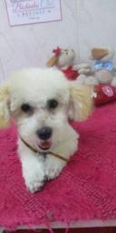 Lindo Filhote Poodle Micro Toy Machinho