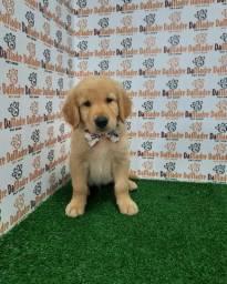 Golden macho é no Da Madre Pet Shop