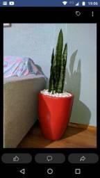 Vasos de planta receba em casa
