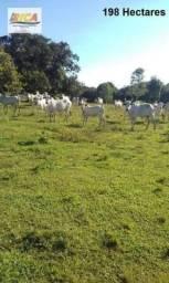 Fazenda no Município Boca do Acre com 198 Hectares a venda