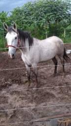 Vendo uma linda égua nova boa para a lida com o gado