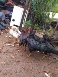 Vendo 6 frango