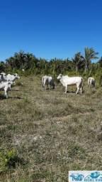 Chácara Fazendinha 80 hectares 20 km apos vila olho dagua