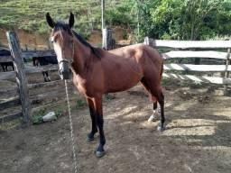 Vendo potro mangalarga filho de cavalo registrado