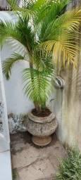 4 palmeiras