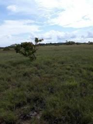Fazenda de 1000 hectares no canta. ler descrição do anuncio
