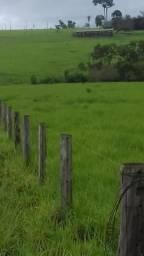 Fazenda para cria recria e engorda de bovinos