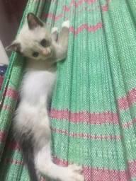 Doação de gatinhos e mae