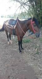 Vendo Cavalo Mangalarga ,Garanhão
