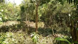 Terreno com várias árvores frutíferas botando!