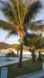 Coqueiro Bahia