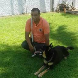 Adestradomento de cães