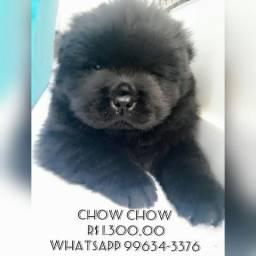 Chow Chow Puro