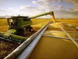 Arrendamentos Fazenda para soja 240 hectares