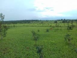 Alugo Fazenda no Ms Arrendamento 300 alq
