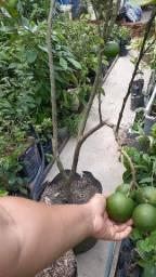 Plantas produzindo