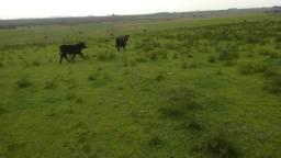 Chácara 14 hectares