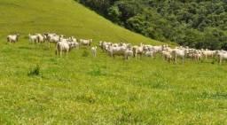 {FR} Crédito Rural Arrendamento