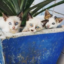Filhotes de Gatos para adoção