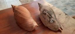 Conchas para decoração e artesanato