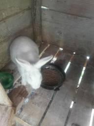 Venda de criação de coelhos