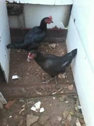 2 galinhas na promoçâo
