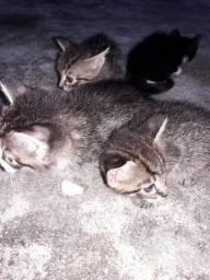 Urgente adote esses gatos hoje
