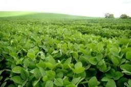 Fazenda de 2000 hectares pra arrendamento soja e arroz. fronteira sul