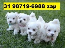 Canil Filhotes Pet Cães BH Maltês Lhasa Beagle Lulu Poodle Yorkshire Shihtzu Pug