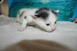 Doação Filhote Gatos - URGENTE
