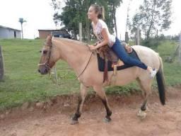 Linda égua rosilha