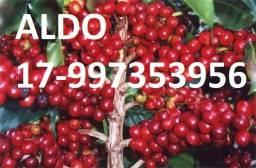 NPK Líquido - Adubo de café