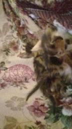 Gatinhas filhotes para adoção