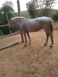 Vendo égua pedrez