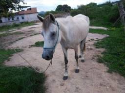 Cavalo e égua para venda